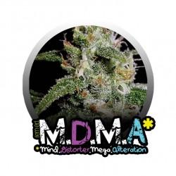 M.D.M.A